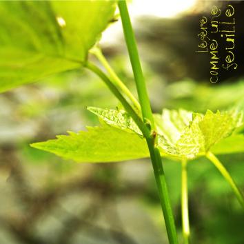 Album_sup-46